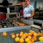 Guía de la ITEAF de centrales hortofrutícolas