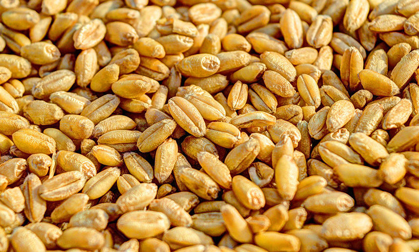 Manual de ITEAF para centrales de procesado de semillas